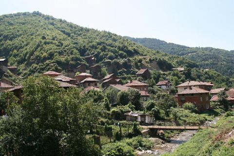 bulgaria-vacas.jpg